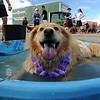 """It's nice to be in the tub after the race.""<br /> The 11th Annual Canine Classic 5K was held at the Boulder Reservoir on Sunday.<br /> For a  photo gallery and video of the race, go to  <a href=""http://www.dailycamera.com"">http://www.dailycamera.com</a>.<br /> Cliff Grassmick/ April 17, 2011"