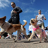 """Dogs and people of all shapes and sizes begin the race.<br /> The 11th Annual Canine Classic 5K was held at the Boulder Reservoir on Sunday.<br /> For a  photo gallery and video of the race, go to  <a href=""""http://www.dailycamera.com"""">http://www.dailycamera.com</a>.<br /> Cliff Grassmick/ April 17, 2011"""