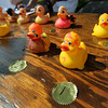 Record-Eagle/Keith King<br /> The first-place rubber duck, at bottom, lies on a table with other high-placing ducks Thursday, July 7, 2011 during the Traverse City Optimist Club Boardman River Duck Race. Funds raised through the race are planned to go for youth charities.