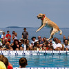 Record-Eagle/Jan-Michael Stump<br /> Sky, owned by Brian Butler of Grand Rapids, takes a leap in the Ultimate Air Dogs competition at the National Cherry Festival.