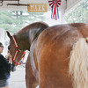 Record-Eagle/Keith King<br /> Brandi Hajjar, 17, of Traverse City, pets Mark, a Belgian draft horse owned by Jim Breithaupt, Saturday, August 13, 2011 at the Northwestern Michigan Fair. Mark weighs approximately 2,500 pounds and is 20-hands tall.