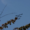 Another shot of the Delta formation, flying West now, coming around for their last pass.