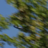I was amazed that I got the plane in focus.  I was moving the camera (and the bulky 400mm lens) from left to right, trying to catch the action.  Sadly, a tree got in the way, but I kinda like the effect.