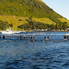 "Port of Tauranga Half Ironman, 2011, swimmersleaving and entering water at lap point. Tauranga is New Zealands 5th largest city and offers a wonderfull variety of scenic and cultural experiences. ALSO SEE; <a href=""http://www.blurb.com/b/3811392-tauranga"">http://www.blurb.com/b/3811392-tauranga</a>"