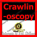 16 Crawlinoscopy-1102