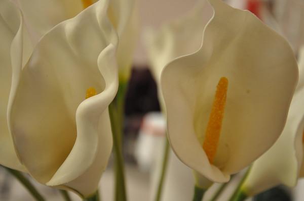 2011 Valentine's Vow Renewal