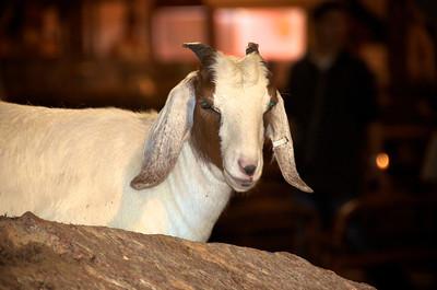 Protecting Goat Mountain