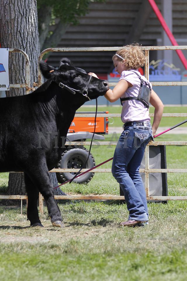 Taylor Weld County Fair 2011 (22)