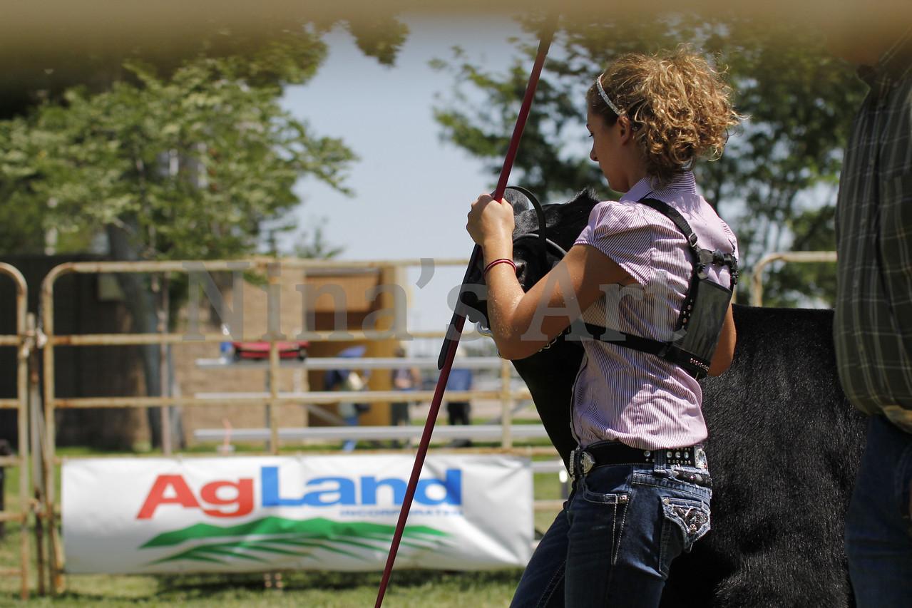 Taylor Weld County Fair 2011 (17)