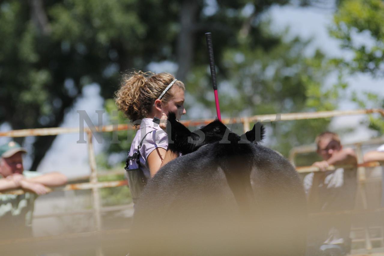 Taylor Weld County Fair 2011 (18)
