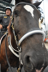 Erie County Mounted Police 008