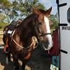 20121110-trail-ride-challenge-018