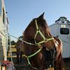 20121110-trail-ride-challenge-024