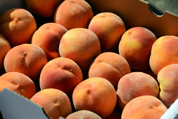 """Palisade peaches from Tate Orchards.<br /> For more photos and a video from the Peach festival, go to  <a href=""""http://www.dailycamera.com"""">http://www.dailycamera.com</a>.<br /> Cliff Grassmick  / August 18, 2012"""