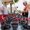 Record-Eagle/Keith King<br /> Renee Dawson, of Minneapolis, Minn., and Tara Dawson, 10, are assisted by Dave Wilsey, from left, and Lance Klaty, with sweet cherries from Edmondson Orchard Saturday, July 7, 2012 during the National Cherry Festival.