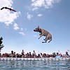 Record-Eagle/Jan-Michael Stump<br /> Star, owned by Brian Butler of Grand Rapids, takes a turn during Thursday's Ultimate Air Dogs Competition at the Open Space. The event finals will be Saturday at 3 p.m.