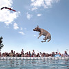 Record-Eagle/Jan-Michael Stump<br /> Star, owned by Brian Butler. of Grand Rapids, takes a turn during Thursday's Ultimate Air Dogs Competition at the Open Space. The event finals will be Saturday at 3 p.m.