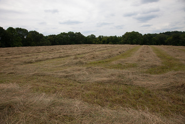 The cut hay in the campground field ready for bailing. (Howard Pitkow/for Newsworks)