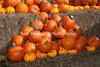 SCARECROWFEST-2012-0026