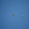 2012-07 | Navy Seals Parachuting at Puopolo Park 69 - 2012-07-03 at 10-04-15