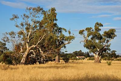 Driving towards the Flinders Ranges