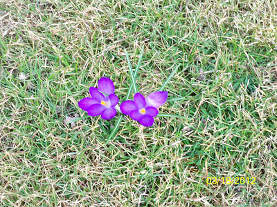 This is only March.  Flowers growing in our backyard.