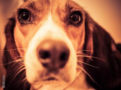 2013-12: Bedi Good Dogs, Dal & Devina