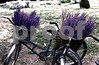 P1060749 Bicycles w Lavender Monday Morning BG, enhance lav