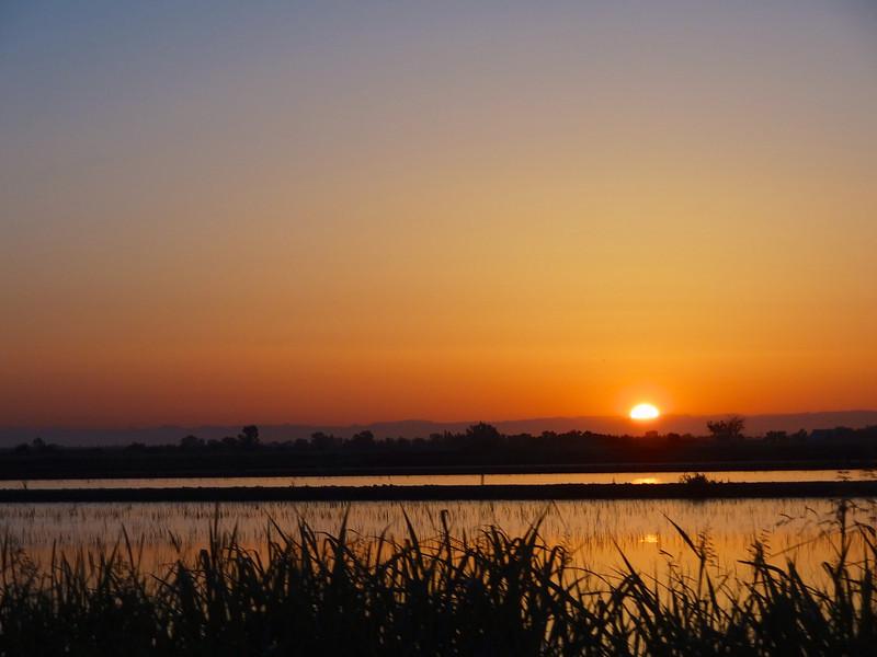 Yolo rice fields at sunrise (courtesy Aki Yamakawa)