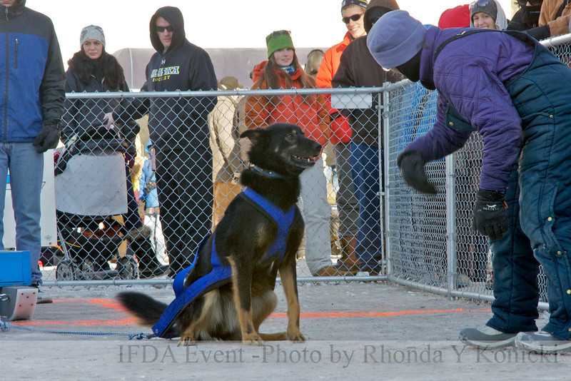 13LTMarch_11  - Liam and handler Lucy<br /> 2013 IFDA Weight Pull Event - March 16 at Downtown Fairbanks