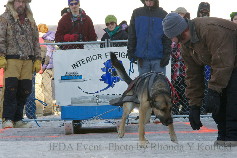 13LTMarch_28 Tango and handler Amanda<br /> 2013 IFDA Weight Pull Event - March 16 at Downtown Fairbanks