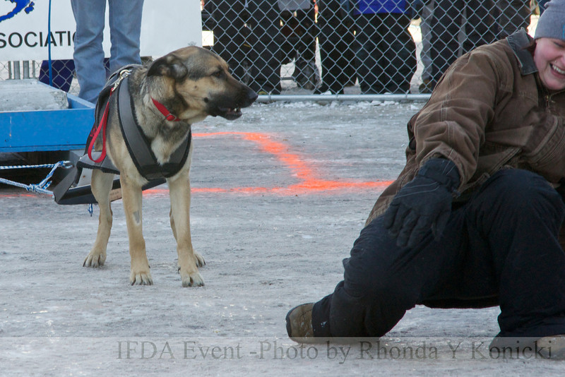 13LTMarch_20 Tango and handler Amanda<br /> 2013 IFDA Weight Pull Event - March 16 at Downtown Fairbanks