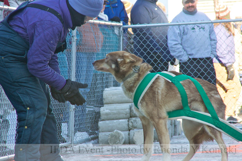 2013 IFDA Weight Pull<br /> March 16 Downtown Fairbanks<br /> 13ULMarch_47 --- Taos with handler Lucy