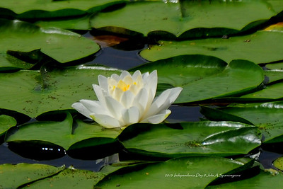 lillypad LSW_4183