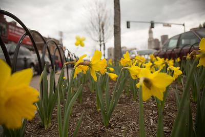 Daffodil Close Up - 2013-04-14 at 13-19-31