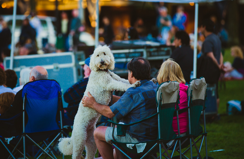 The concert was enjoyed by all (and not just humans)