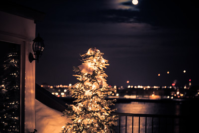 Snow Tree by Moonlight at Union Wharf