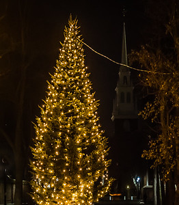 Prado Christmas Tree on Paul Revere Mall