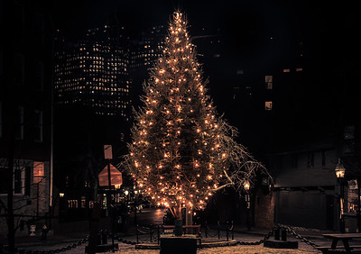 North Square Christmas Treet