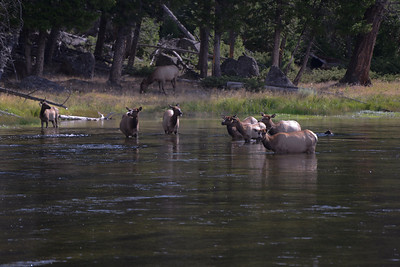 2013 09 07 12 40 Montana 11710