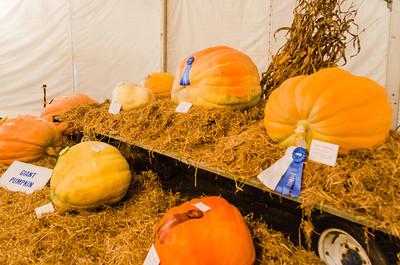 State Fair - Champion Pumpkins