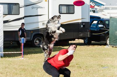 State Fair - Dog Display