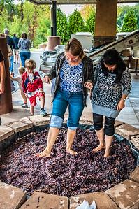 Gervasi Vineyard