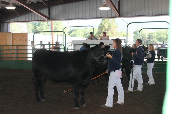 Lassen County Fair Beef Show