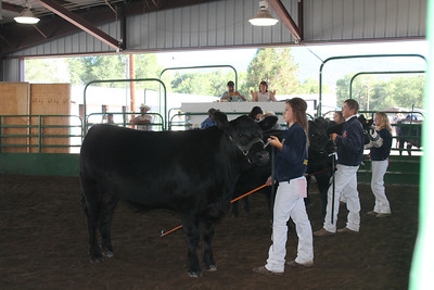 Lassen County Fair Beef Show