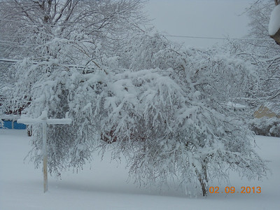 Back yard Feb Snowstorm