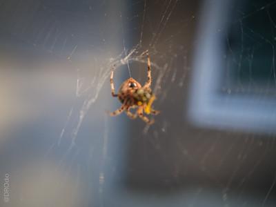 2014-09: The Not So Itsy Bitsy Spider