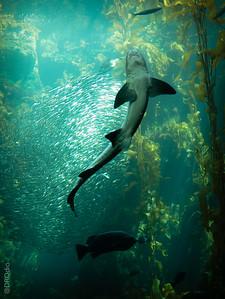2014-10: Monterey Bay Aquarium