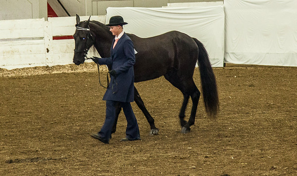 2014 4H Showmanship I, II, III Day 3