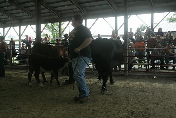 Market Beef Show